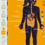 Der menschliche Körper: eine gut gemachte Anatomie Lern App für Kinder